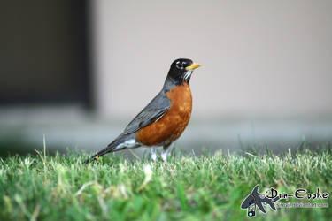 Robin by Sirevil