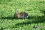 Feeding in the Grass