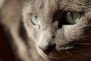 Olivia - up close