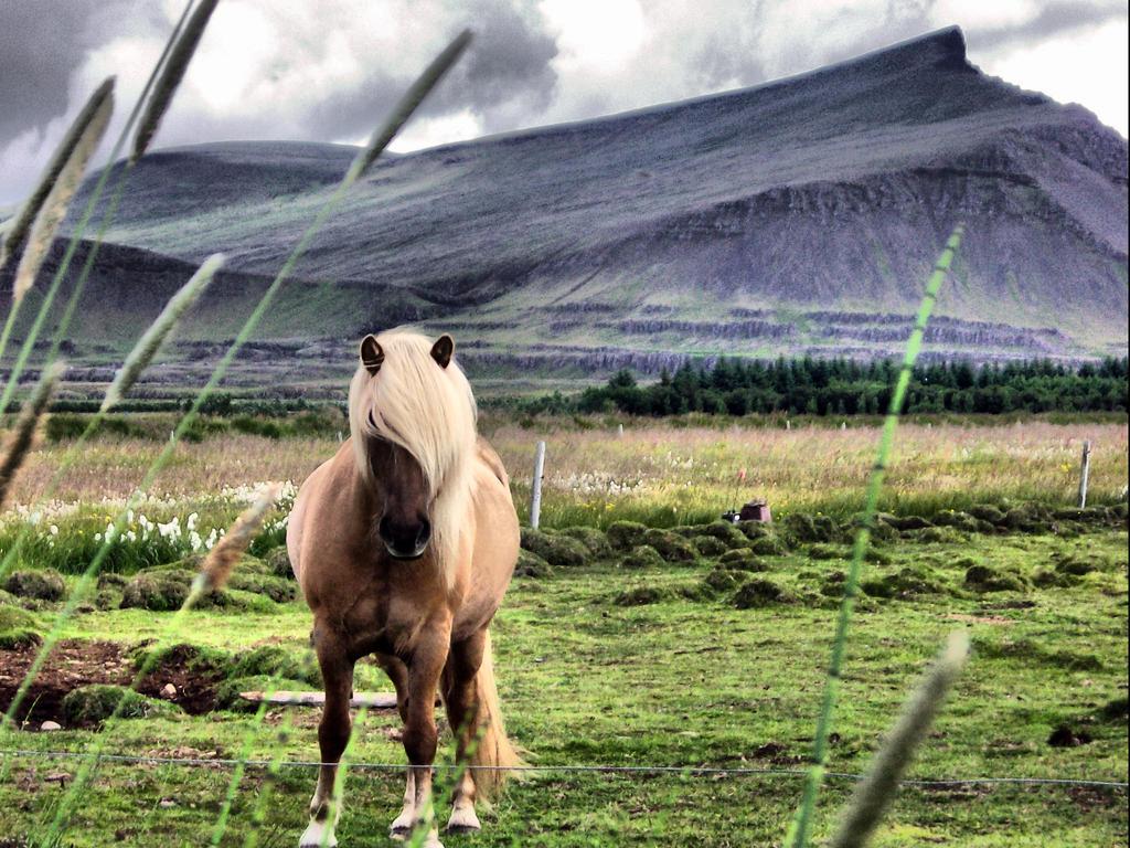 Islandais - Page 2 Icelandic_horse_by_Miciur