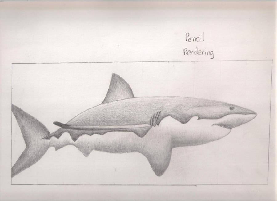 Shark - pencil rendering by Skyblader on DeviantArt