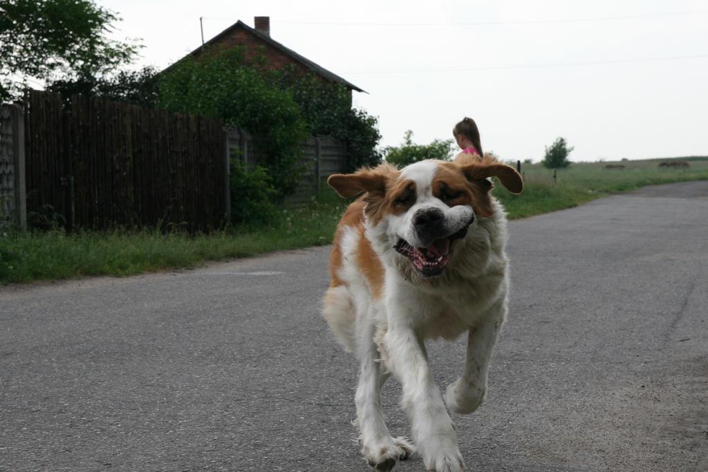 my dog by viktor-wronek
