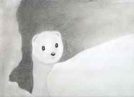 A little marten by oswin-drawings