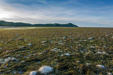 Tidal Flats by TheMetronomad