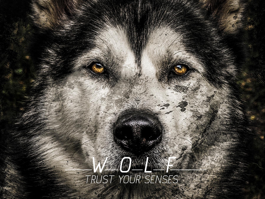 wolf backgrounds quotes quotesgram