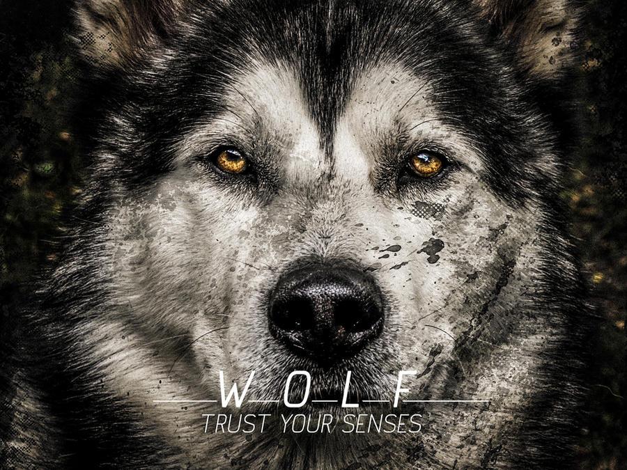 Wolf Wallpaper By SpiderIV