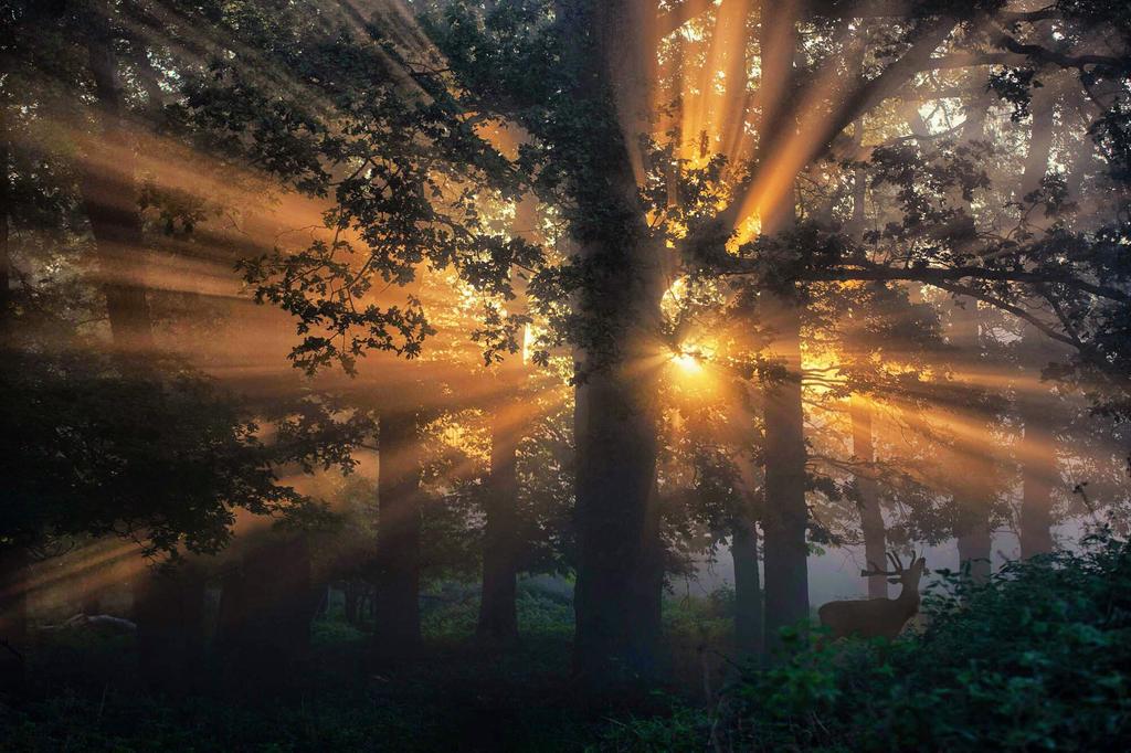 Morning 7 by vidmulia