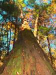 Natures true colors