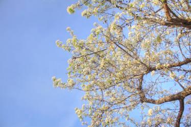Spring is Arriving