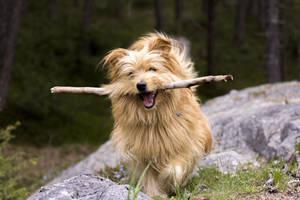 Free Photo Dog by MentalCinephile