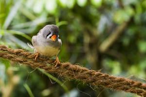Free Photo Bird by MentalCinephile