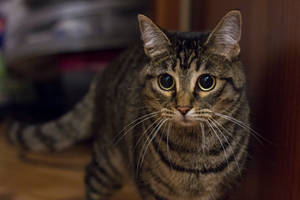Free Photo Cat 2 by MentalCinephile