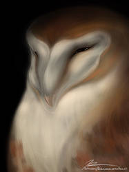 Barn Owl by Sunglasses-afterDARK
