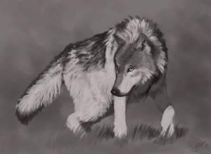 Wolf Study 090617