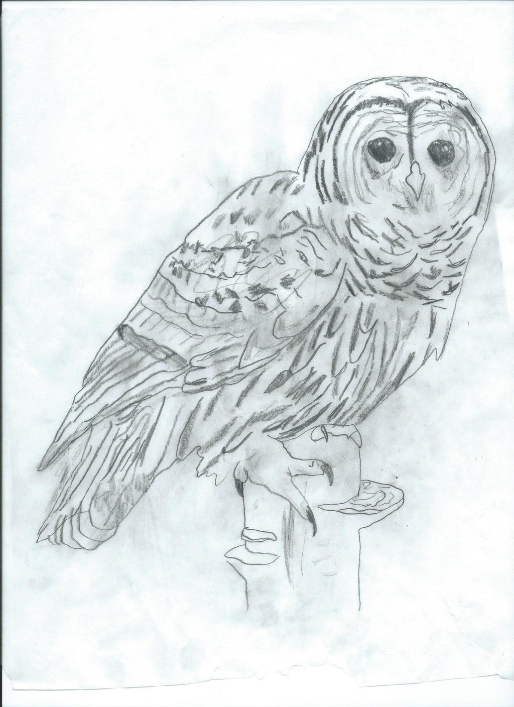 Owl Sketch by DaBlueNinjaz