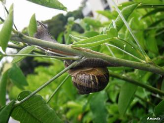 A snail by A-M-A-N-D-E