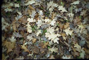 .oaken bed. film texture