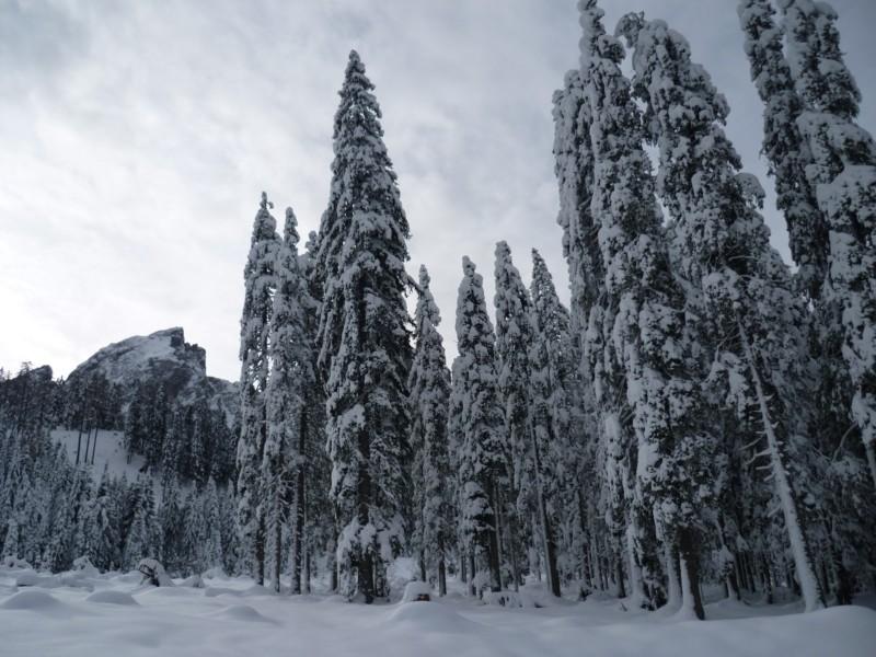 Big tree and big snow by snowphoenix2006
