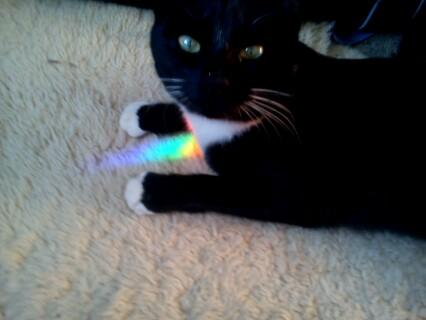 Chasing Rainbows by Midnyt-Moonlight