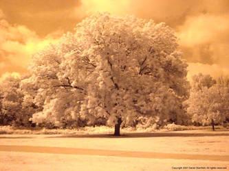 IR Pecan Tree by poestokergorey