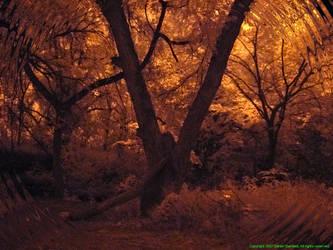 IR Amber Forest by poestokergorey