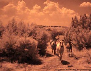 IR Horses by poestokergorey