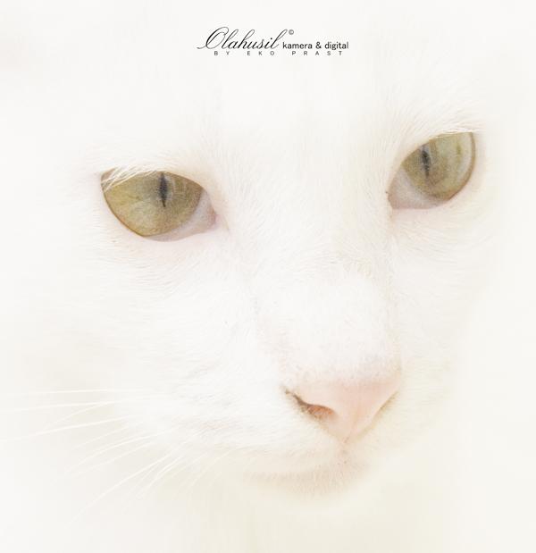 white cat by koleetonobe