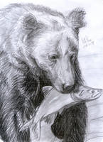 Bear with prey by matsmoebius