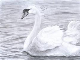 Swan by matsmoebius