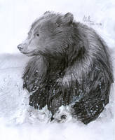 Bear Cub by matsmoebius