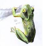 Frog by matsmoebius
