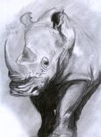 Rhinoceros by matsmoebius