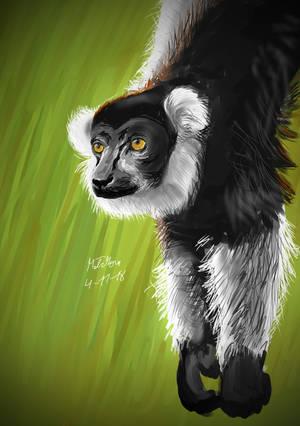 Lemur by matsmoebius