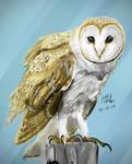 Barn Owl again