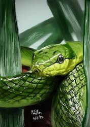 Snake by matsmoebius