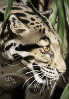 Leopard by matsmoebius