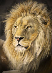 Lion by matsmoebius