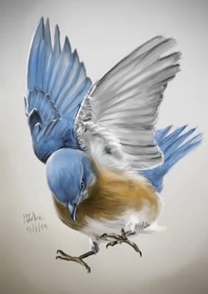 Blue bird by matsmoebius