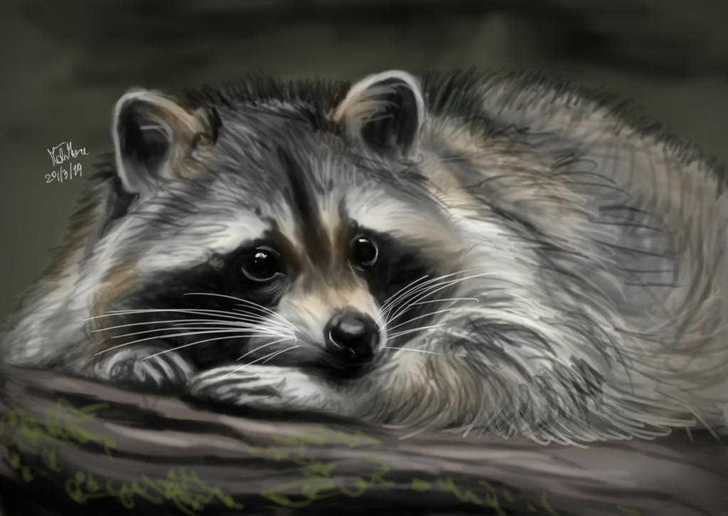 Raccoon by matsmoebius