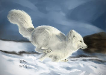 Arctic Fox by matsmoebius