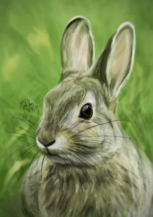 Rabbit by matsmoebius