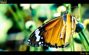 Butterflyyy by Janjua