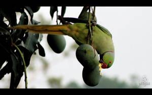 Parrot by Janjua