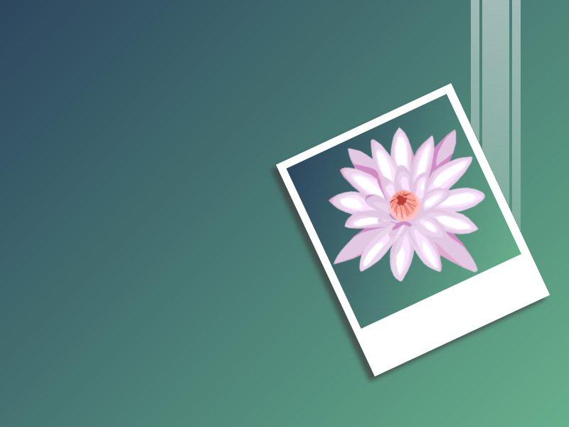Lily Desktop Wallpaper