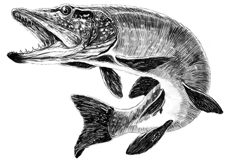 Pike Fish By Maksst On DeviantArt