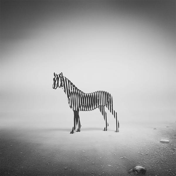 Zebra Mist by Apachennov