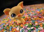 Confetti Party Piggy by Dellessanna