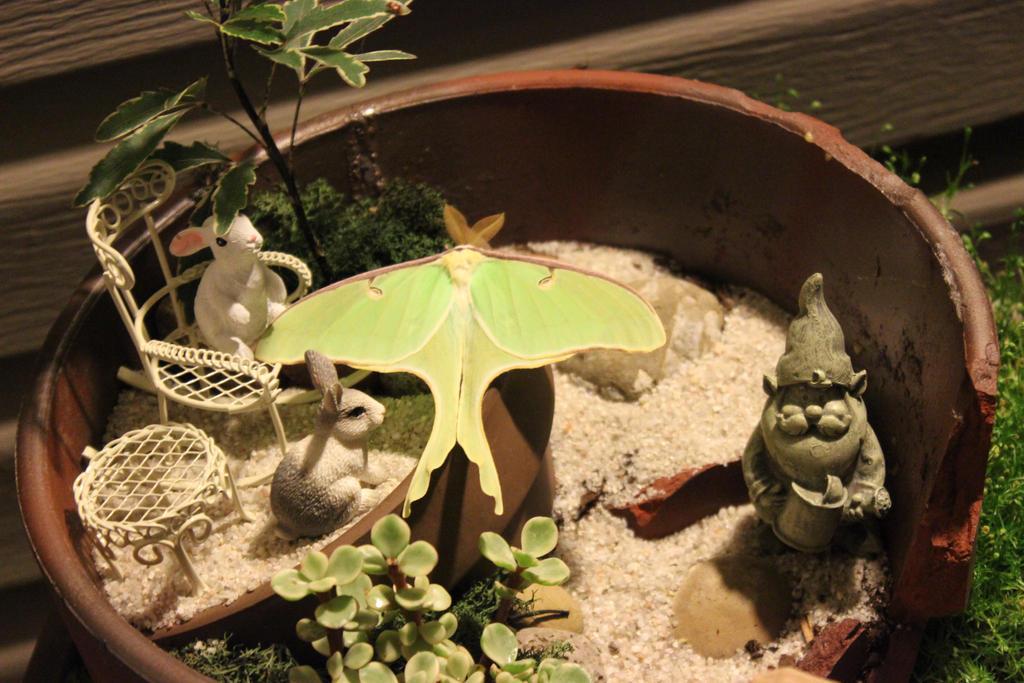 Lunar Moth by Dellessanna