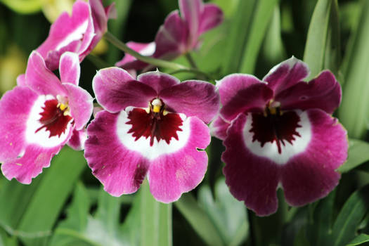 Orchid 17