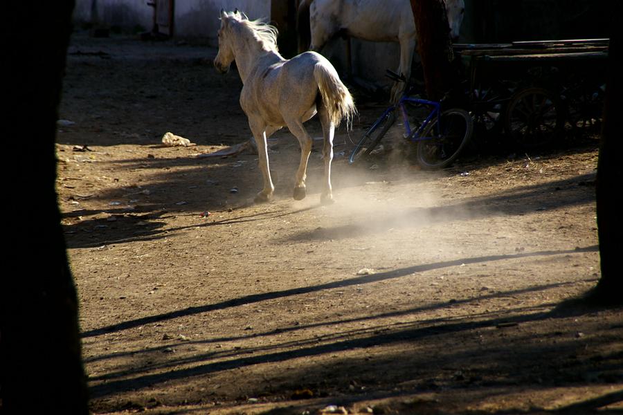 runaway groom by mozitakurin